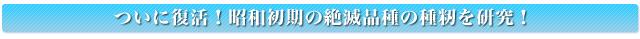 ついに復活!昭和初期の絶滅品種の種籾を研究!